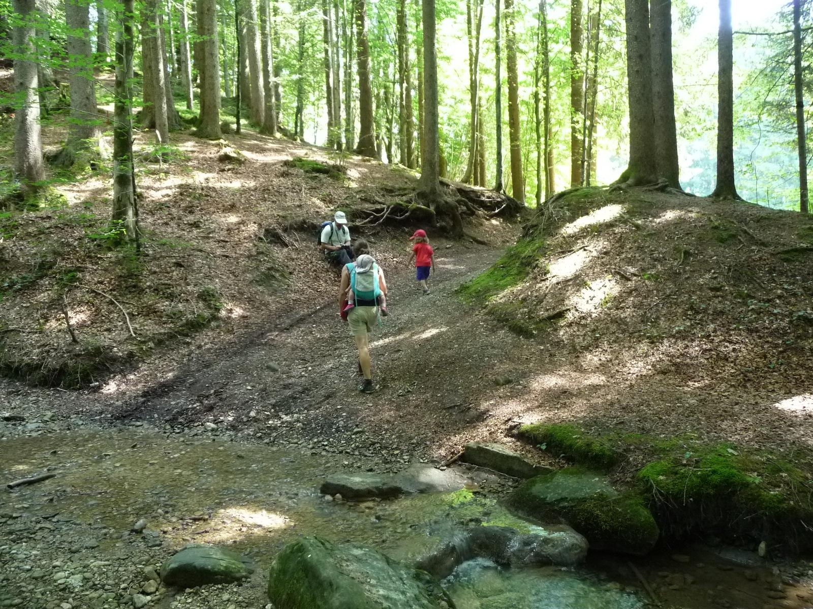 Die Familienwanderung im in Appenzell führt uns auch durch kühle Wälder.