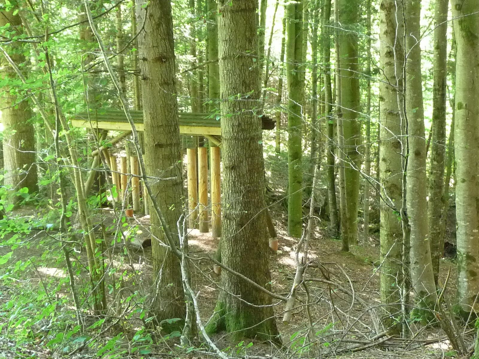 Klangstationen im Wald auf der Wanderung mit Kindern im Appenzellerland