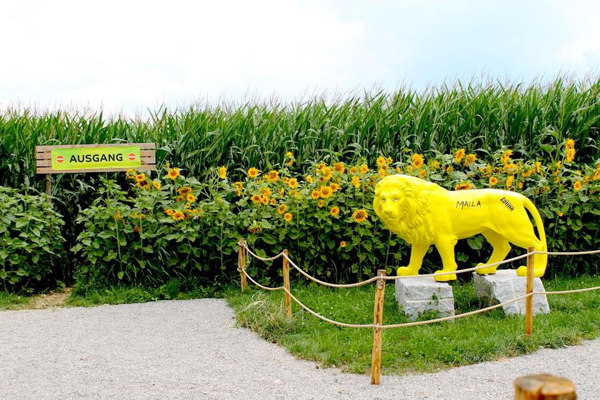 Das Maislabyrinth in Langrickenbach am Bodensee ist während dem Sommer geöffnet.