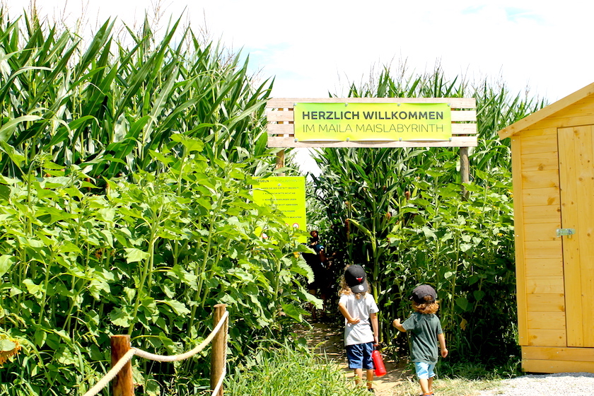 Maislabyrinth am Bodensee - ein Irrweg durchs Maisfeld