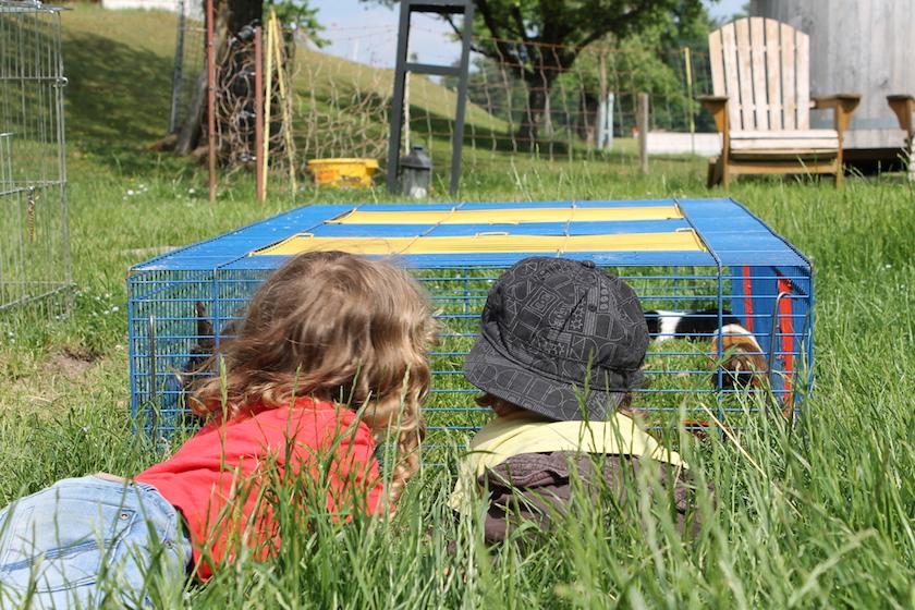 Ferien auf dem Bauernhof in der Ostschweiz - Tiere beobachten