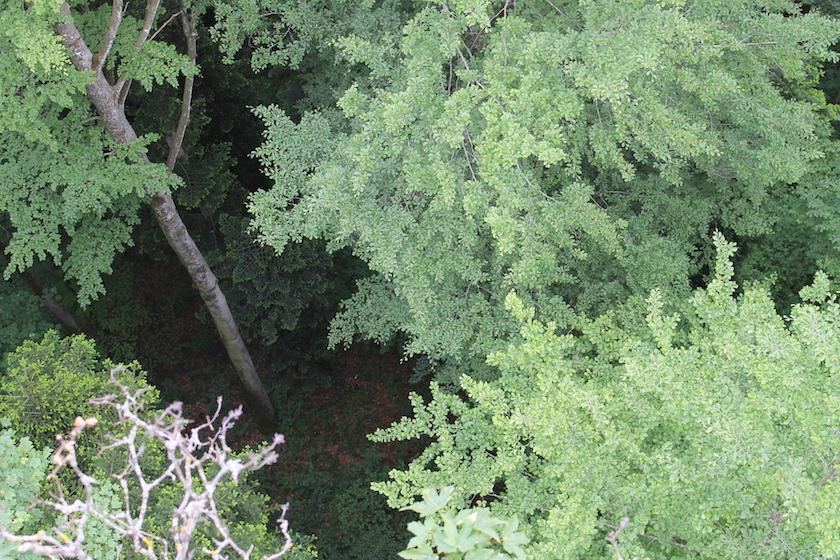Aussicht vom Baumwipfelweg runter auf den Boden