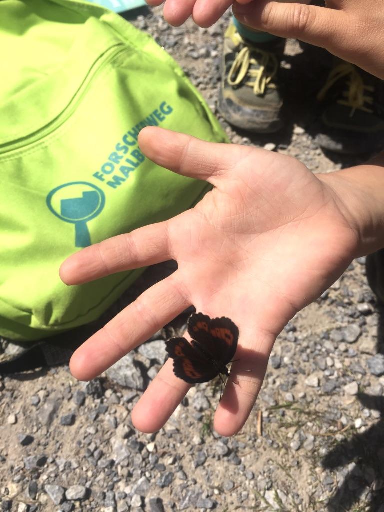 Schmetterlinge gibt es auf dem Familienwanderweg in Malbun zur Genüge