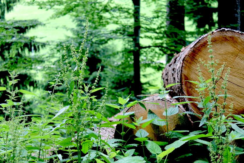 Der Rätselweg Schwellbrunn im Appenzellerland führt durch eine wunderschöne Landwaldschaft
