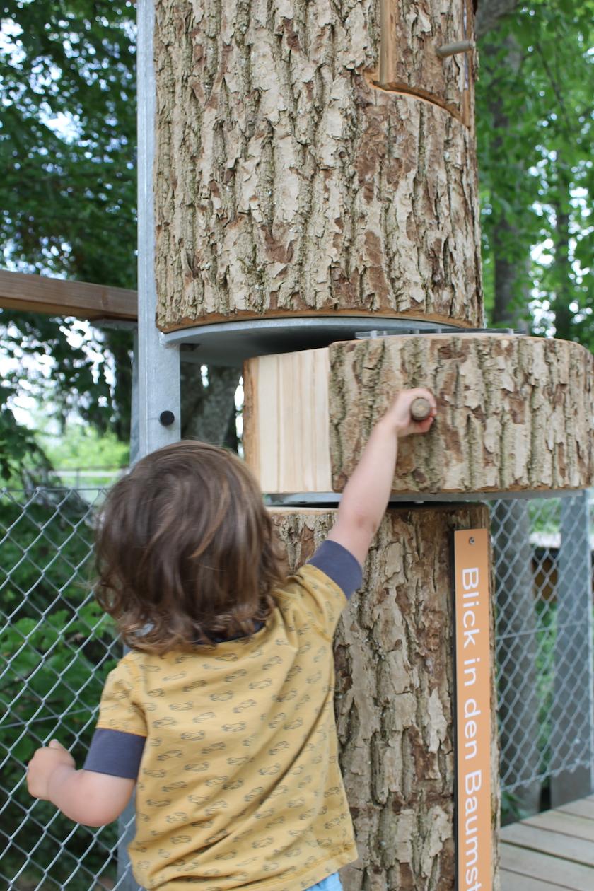 Wie sieht ein Baum innen aus? Das könnt ihr rausfinden auf dem Baumwipfelpfad Mogelsberg
