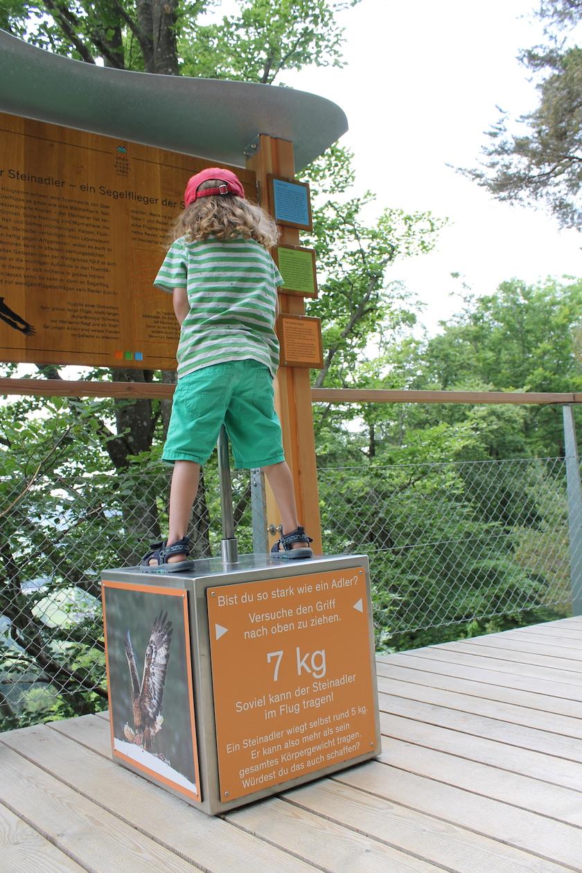 Kräftemessen auf dem Baumwipfelweg in Mogelsberg - wer ist so stark wie ein Adler?
