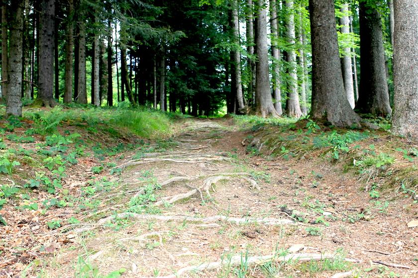 Der Familienwanderweg in der Ostschweiz führt auch durch eine wunderschöne Waldlandschaft