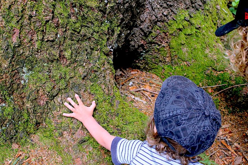 Was gibt es da im Wald zu entdecken? Eine tolle Wanderung durch den Wald, der Rätselweg in Schwellbrunn